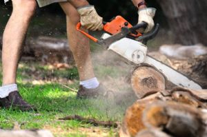 DIY Firewood: How to know where to go?