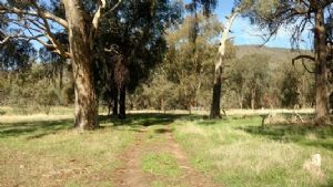 Local trails feature: Baranduda Conservation Reserve