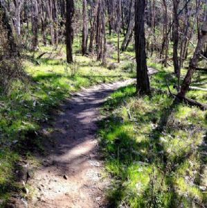 Riverina Endurance Albury Ranges Run
