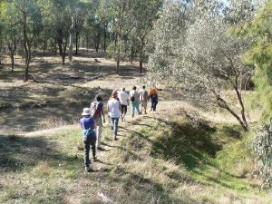 Wildflower Walk 'n Talk: Castle Creek Bushlands